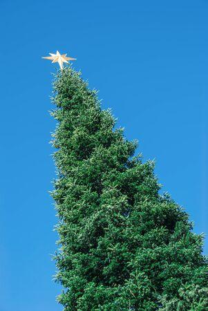 huge christmas tree: top of a huge christmas tree