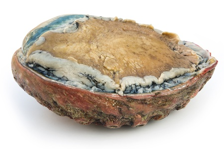 side view giant size raw abalone on white Stock Photo