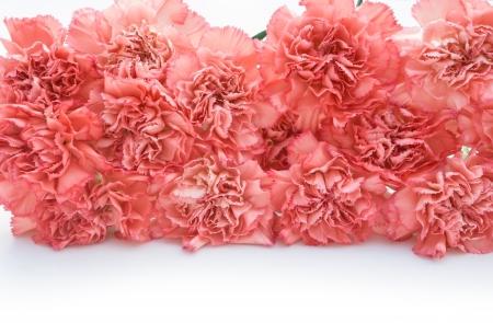 carnation stack up photo