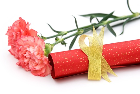 cheery: paper scroll with gold bow and carnation on white Stock Photo