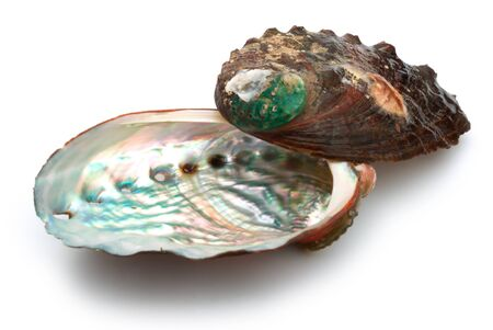 two abalone shells on a white background
