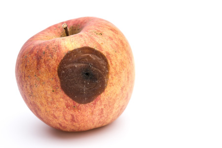 uneatable: rotten apple on a white background