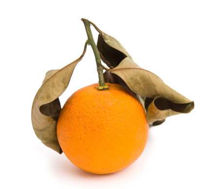 overripe: over-ripe orange on a white background