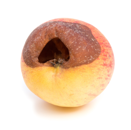 decomposed: rotten apple on a white background