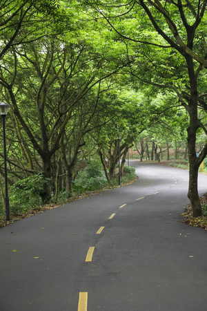 vertical divider: curved road with trees on both sides in the morning