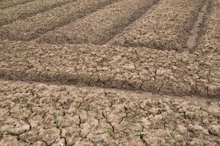 siembra: campo cultivado listo para la siembra Foto de archivo