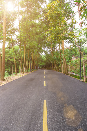 vertical divider: road with trees on both sides against the sun in the morning Stock Photo