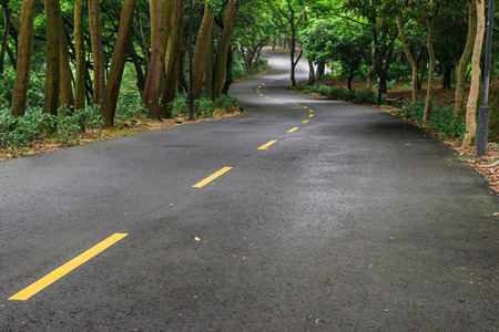 vertical dividers: curved road with trees on both sides in the morning