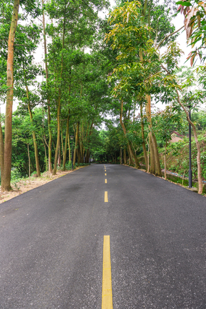 vertical dividers: road with trees on both sides