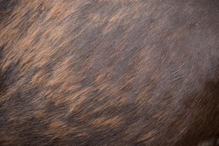 close up of a horse skin