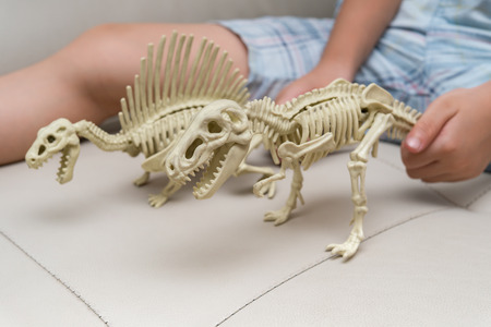kid playing a spinosaurus skeleton and tyrannosaurus skeleton on a sofa at home