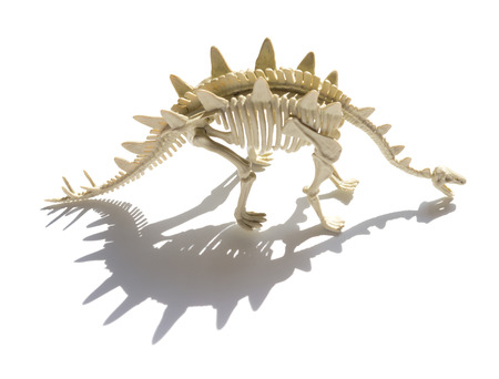 stegosaurus skeleton with shadow on a white background Stock Photo