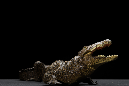 aligator toy in a black background