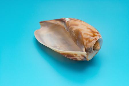 empty cymbium olla on blue background Stock fotó