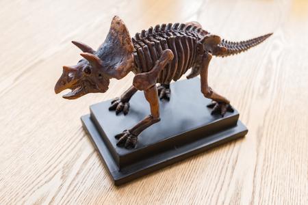 Triceratops skeleton on desk