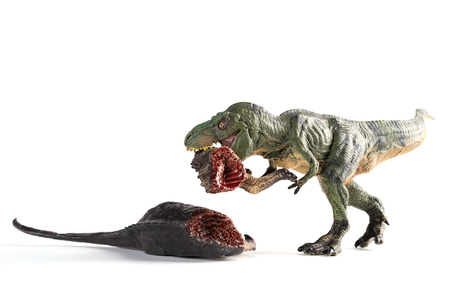 tyrannosaurus biting a dinosaur body on white background