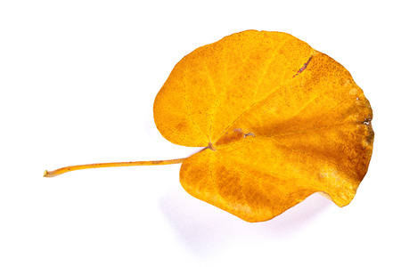front of a faded leaf on a white background