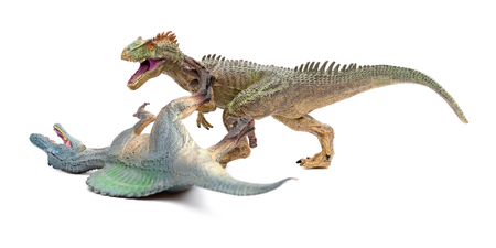 allosaurus fights with spinosaurus on a white background