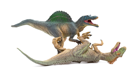 spinosaurus fights with allosaurus on a white background Stock Photo