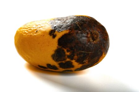 rotten mango close up on a white background 版權商用圖片