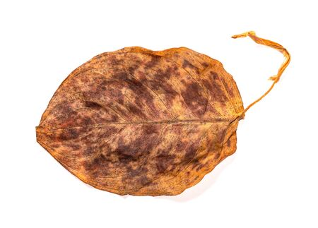 a faded leaf on a white background Banco de Imagens
