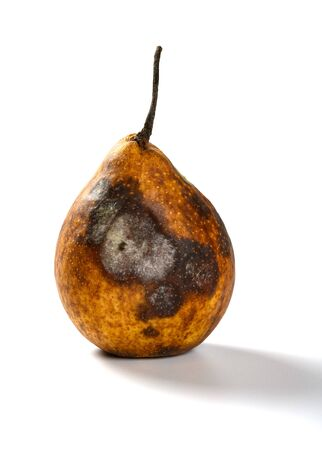 badly overripe pear on a white background