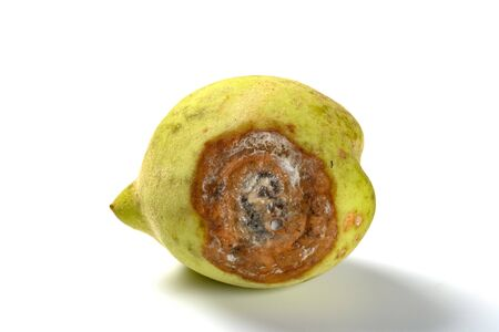 badly overripe peach on a white background
