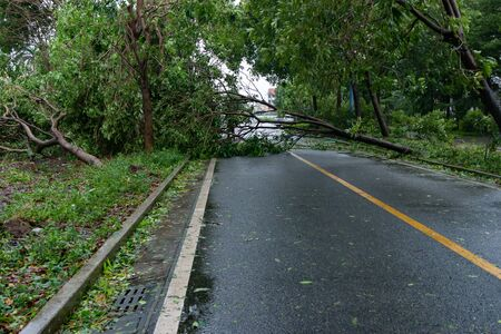 broken tree fell down on the road after a strong storm went through Banco de Imagens