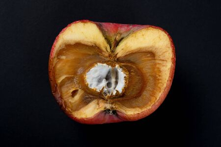 badly shrinked apple with moldy core on black background Фото со стока