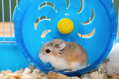 cage with a small pet hamster in the wheel close up