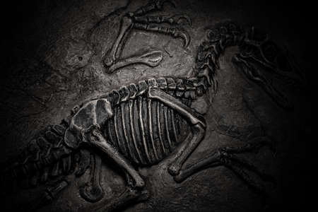 top view central part of dinosaur skeleton fossil with details Stock Photo
