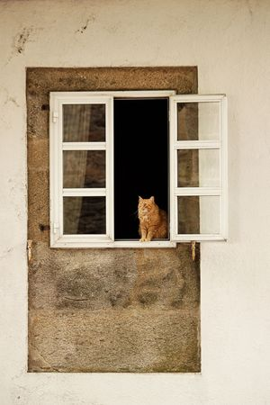 A ginger cat  in the window. Stock Photo