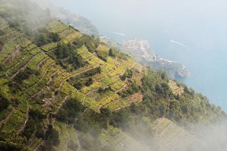 Vineyards, Cinque terre, Italy. photo