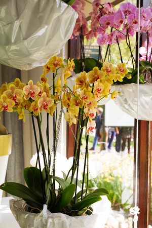 Colorful orchids in flowerpots on flower show