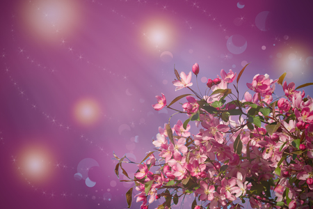 Blossom tree on nature background. Beautiful spring scene with blooming tree, flowers and sunshine in blur style. Pink flower border, frame  Фото со стока