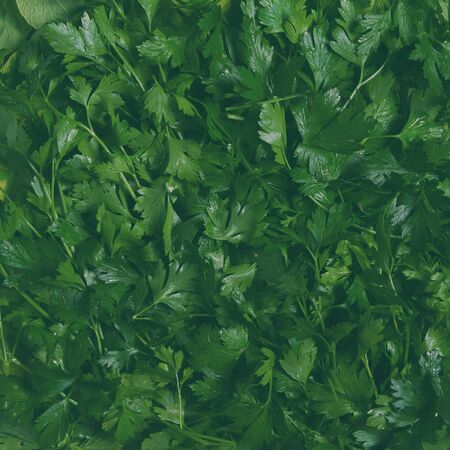 Creative layout made of green leaves. Green texture background surface with leaves. Flat lay, lightly toned image Imagens