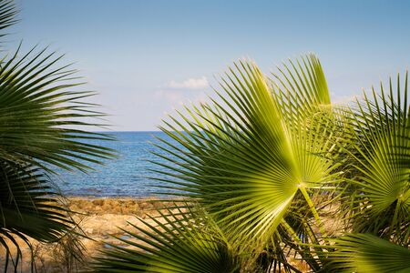 Abstract beach background - palm trees against oceanic blue sky. Copy space, summer vacation concept. Sea beach relax, outdoor travel