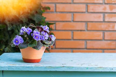 Flower bouquet in vase in front of stone wall. Outdoor arrangement of flowers. Vioets in a pot. View with copy space