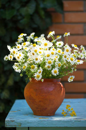 Flower bouquet in vase in front of stone wall. Outdoor arrangement of flowers. Chamomile, camomile, daisy