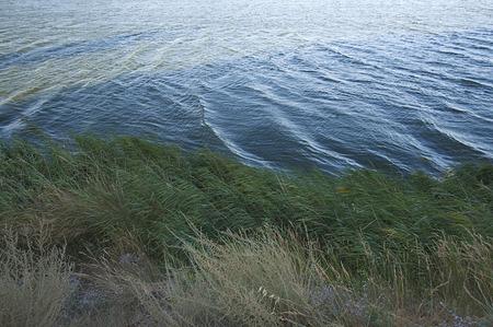 along: Vegetation along a lake