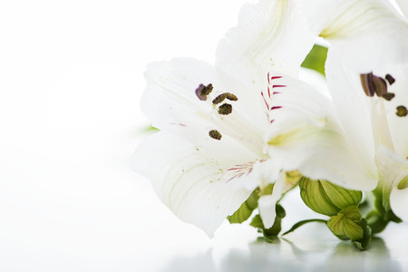 Close-up of a bouquet of lily flowers on white background. Isolated. Copy space. Vertical shoot.