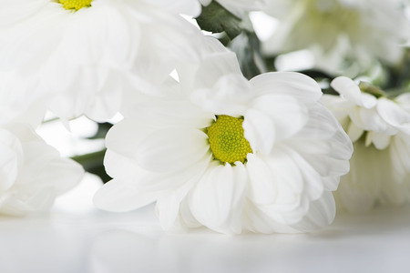 Close-up of daisy flowers on white background. Isolated.