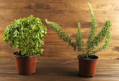 Decoratives green plants on wooden table. Horizontal studio shot. Stock Photo