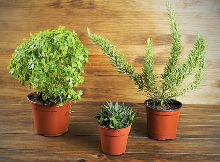 Four decorative green plants on wooden table. Horizontal studio shot.