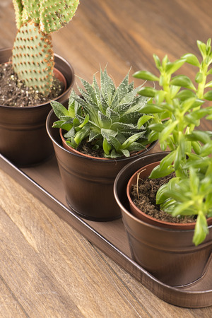 Top view of cactus and plant decoration on wooden table. Vertical studio shot. Stock Photo