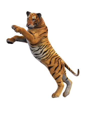 Tiger jumping, wild animal leaping on white background, 3D rendering Stock Photo