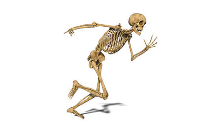 Funny skeleton running, human skeleton exercising on white background, 3D rendering