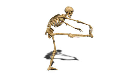 Funny skeleton stretching leg, human skeleton exercising on white background, 3D rendering