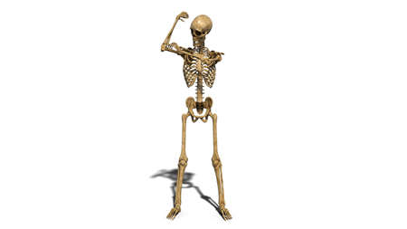 Funny skeleton flexing arm muscles, human skeleton isolated on white background, 3D rendering Standard-Bild