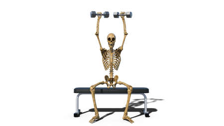 Funny skeleton lifting weights on bench, human skeleton exercising on white background, front view, 3D rendering